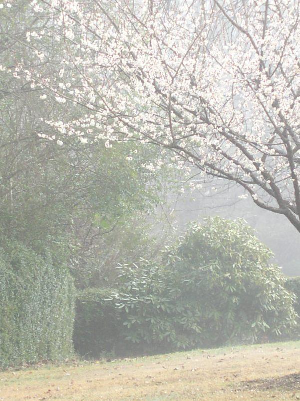 Trees blooming in Jan
