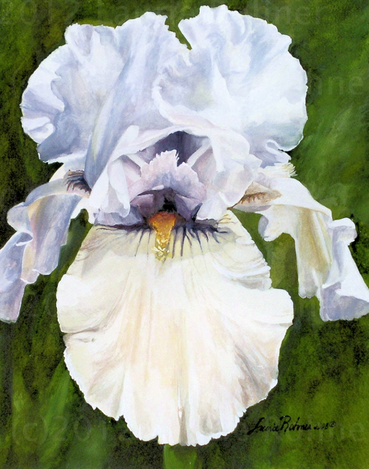 White Iris Nature Art Painting by Laurie Rohner