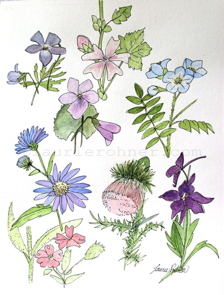 My watercolor painting is an original botanical garden nature art painting of a study for woodland wildflowers.