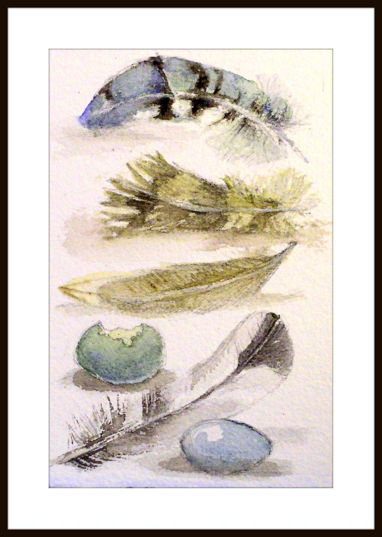 Bird feathers and eggs is a natural history nature art watercolor titled Feather Study I original artwork by Laurie Rohner.