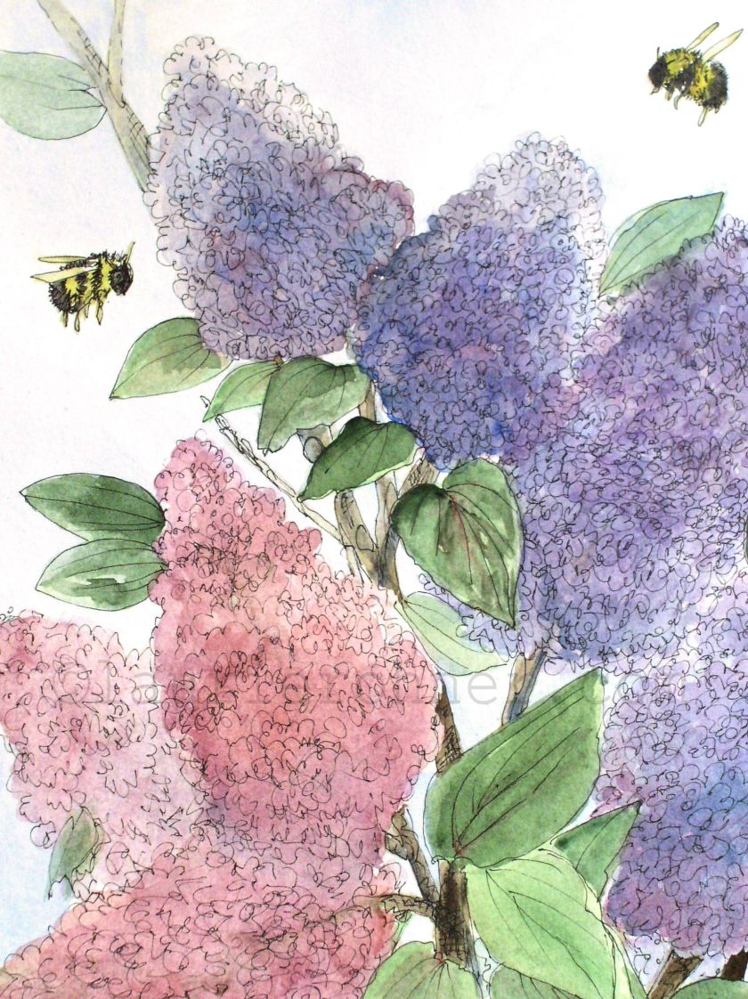 Lilacs in Spring Close up.