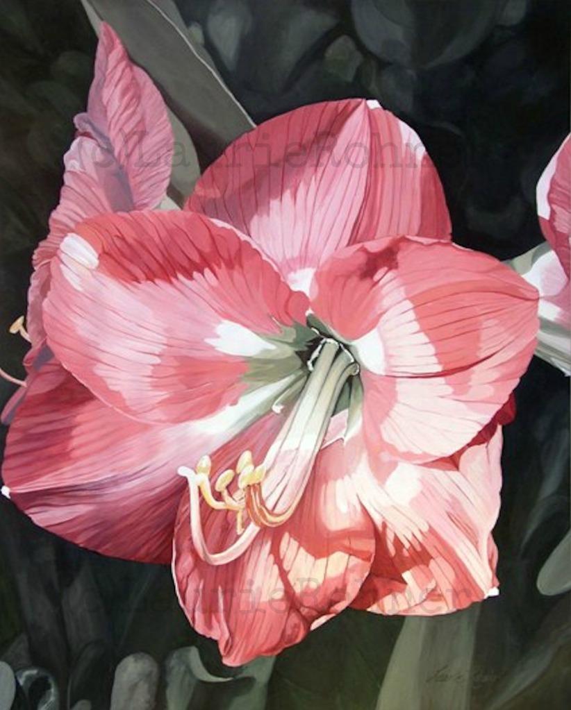 PINK AMARYLLIS GARDEN FLOWER ORIGINAL PAINTING