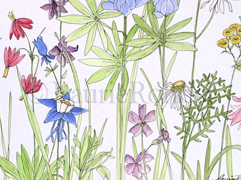 illustration wildflowers