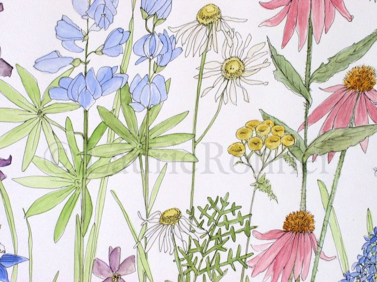 Watercolor illustration of wildflowers