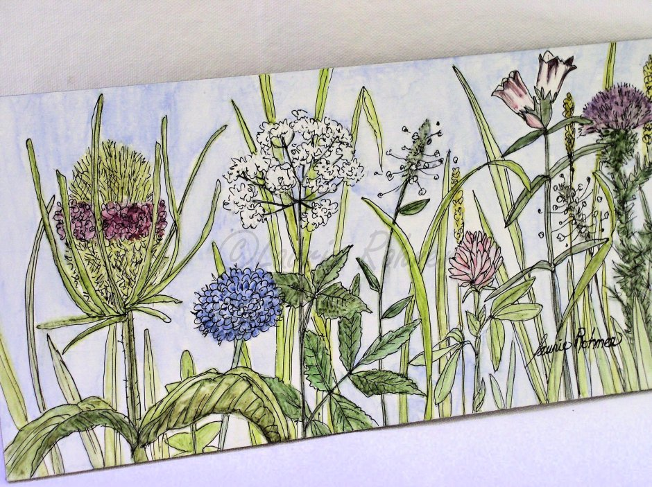 Herbs and Flowers Watercolor