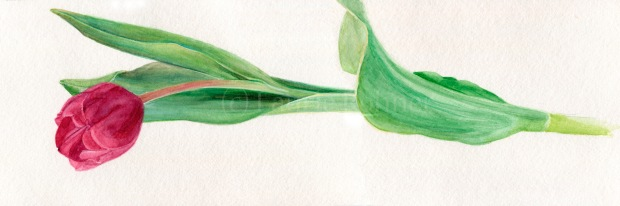 Original watercolor botanical floral art