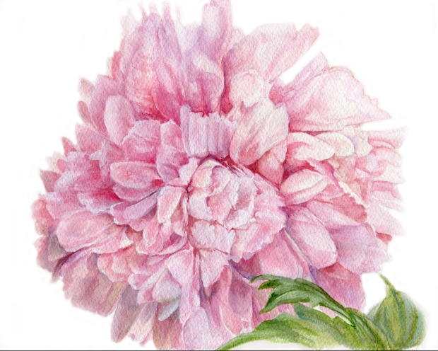 Pink Peony Floral Watercolor Original Painting by Laurie Rohner