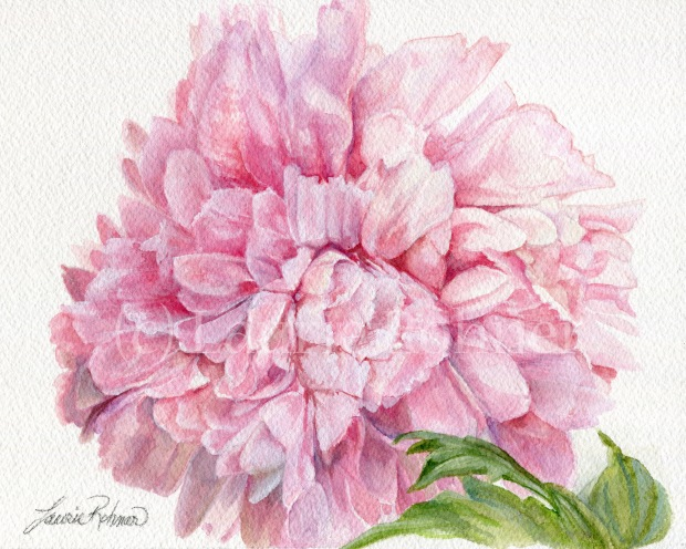 Pink Peony Floral Watercolor Original Painting
