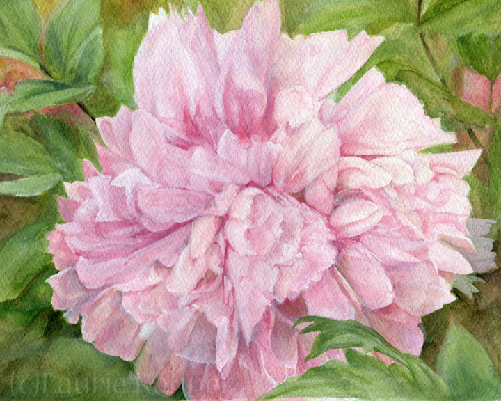 pink peony original watercolor