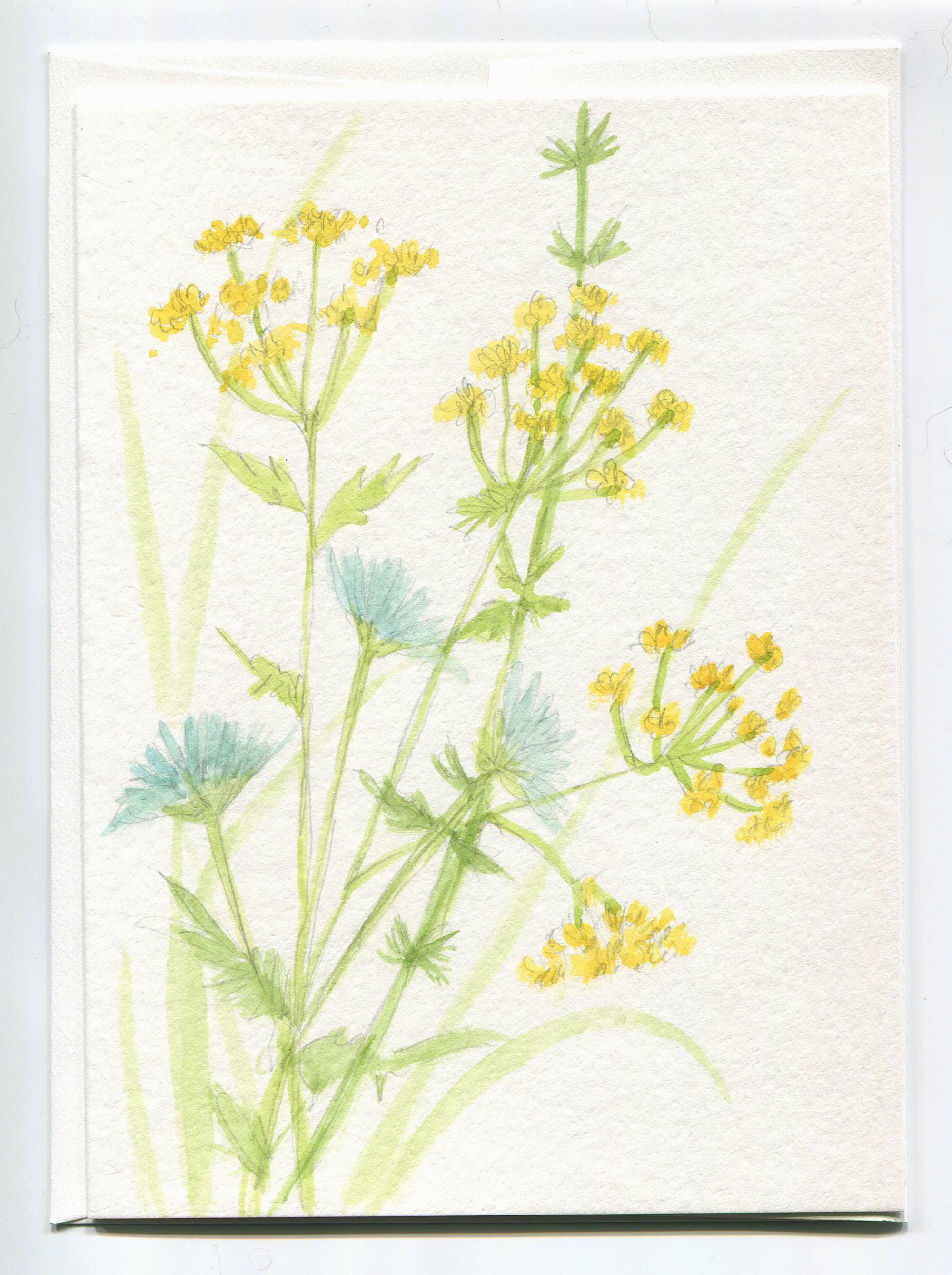 Wildflower Dill Cornflower Watercolor Flower Blank Card with Envelope Original Nature Art