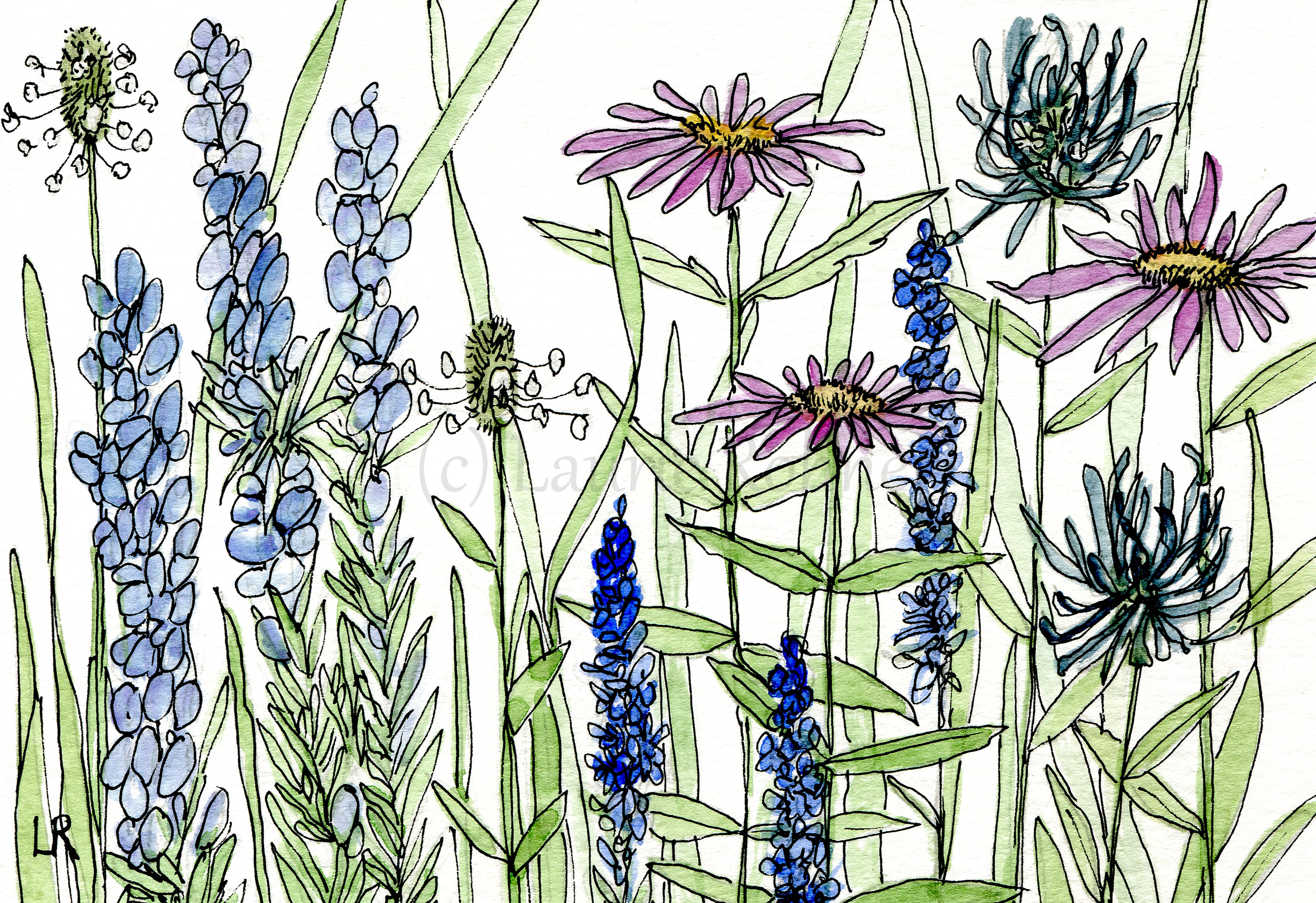 Watercolor Lavender Aster Wildflowers Blue Flowers Original Art Card with Envelope